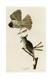Great Crested Flycatcher Reproduction procédé giclée