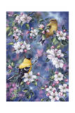 Gold Finch and Blossoms Giclee Print by Jeff Tift