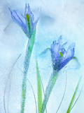 Flores Azules Photographic Print by Moises Levy