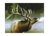 Elk in Mist Giclee Print by Spencer Williams