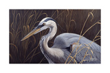 Great Blue Heron Giclee Print by Wilhelm Goebel