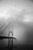 Golden Gate and Birds Fotografisk tryk af Moises Levy