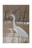 Great Egret Giclee Print by Rusty Frentner