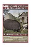 Hog Food Giclee Print