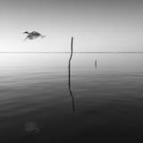 Vole Reproduction photographique par Moises Levy