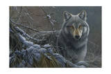 Grey Wolf Giclee Print by Jeremy Paul