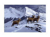 High Country Rams Giclee Print by Wilhelm Goebel