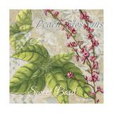 Herbs 4 Basil Giclee Print by Megan Duncanson