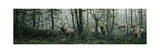 Enchanted Forest Giclee Print by Jeff Tift