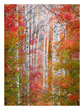 Autumn Passage Posters by Elizabeth Carmel