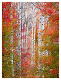 Autumn Passage Print by Elizabeth Carmel
