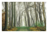 Magic Is Everywhere Posters by Lars Van de Goor