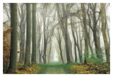 Magic Is Everywhere Prints by Lars Van de Goor