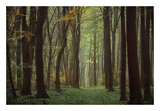 Arriving Nowhere Posters by Lars Van de Goor