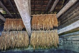 Interior of Tobacco Barn Photographic Print by Gary Carter