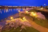 Night Image of Cherry Blossoms and Water Front Park, Willamette River, Portland Oregon. Photographic Print by Craig Tuttle
