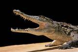 Crocodylus Niloticus (Nile Crocodile) Photographic Print by Paul Starosta