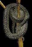 Morelia Spilota (Carpet Python) Fotografisk tryk af Paul Starosta