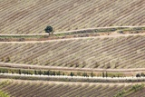 Aerial View of Orchards, South Africa Photographic Print by Richard Du Toit