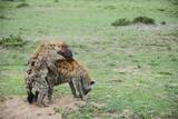 Kenya, Masai Mara National Reserve, Hyena Mating Photographic Print by Anthony Asael