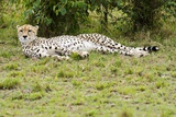 Kenya, Masai Mara National Reserve, Cheetah Lying and Resting Photographic Print by Anthony Asael