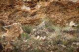 Leopard on Rocks, South Africa Photographic Print by Richard Du Toit