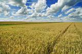 Wheat Field and Cumulonimbus Clouds Photographic Print by Frank Krahmer