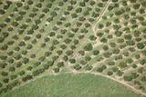 Citrus Trees Aerial View Photographic Print by Richard Du Toit