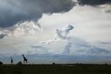 Giraffe and Storm Clouds, Botswana Photographic Print by Richard Du Toit