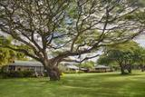 Large Old Tree and Field in Waimea Photographic Print by Terry Eggers