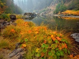 Indian Rhubarb in Fall Color along the Wild & Scenic Illinois River in Siskiyou National Forest, Or Photographic Print by Steve Terrill