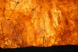 Fire in Reedbed, South Africa Photographic Print by Richard Du Toit