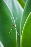 Agave Growing with Spider Web Attached Photographic Print by Terry Eggers