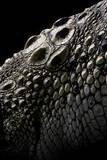 Crocodylus Porosus (Saltwater Crocodile) - Scales Photographic Print by Paul Starosta