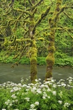 Brook in Moss Covered Beech Forest Photographic Print by Frank Krahmer