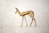 Springbok, South Africa, Photographic Print by Richard Du Toit