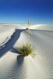 Gypsum Desert White Sands with Yuccas Photographic Print by Frank Krahmer