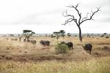 Buffalo Herd, South Africa Photographic Print by Richard Du Toit