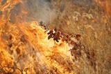Grassland Fire, South Africa Photographic Print by Richard Du Toit