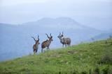 Kudu Bulls, South Africa Photographic Print by Richard Du Toit