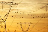 Spurwing Geese and Powerlines, South Africa Photographic Print by Richard Du Toit