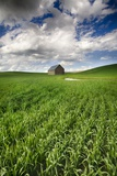 Old Barn in Spring Wheat Field with Beautiful Clouds Photographic Print by Terry Eggers