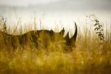 Black Rhino; South Africa Photographic Print by Richard Du Toit
