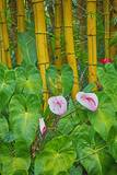 Garden on the Island of Maui with Pink Anthurium, Yellow Bamboo, and Philodendron Plants Photographic Print by Terry Eggers