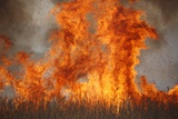 Inferno in Reedbeds, South Africa Reproduction photographique par Richard Du Toit