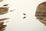 Saddlebilled Stork, South Africa Photographic Print by Richard Du Toit
