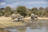 Waterhole, South Africa Photographic Print by Richard Du Toit