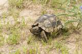 View of Texas Tortoise Photographic Print by Gary Carter