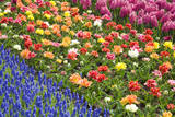 Rows of Flowers in Keukenhof Gardens Fotoprint av Mark Bolton