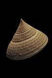 Calliostoma Selecta Photographic Print by Paul Starosta